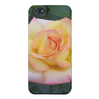 Yellow and Pink Rose Cover For iPhone SE/5/5s