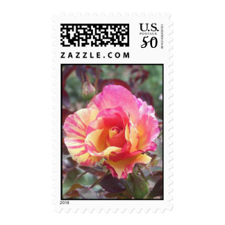 yellow and pink rose postage stamps
