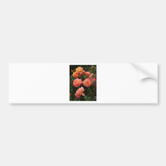 Yellow and pink roses bumper sticker