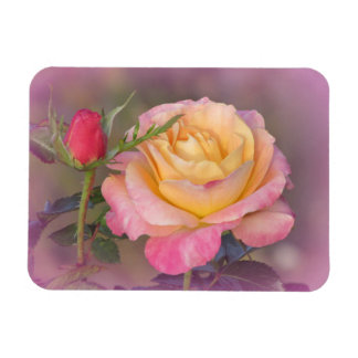 Yellow and Pink Roses Magnet