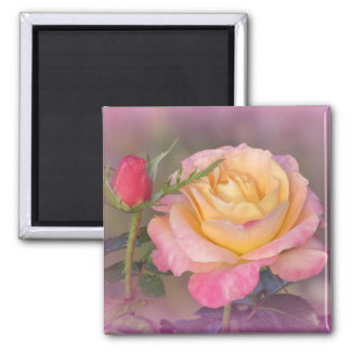 Yellow and Pink Roses Magnets