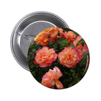Yellow and pink roses pinback button