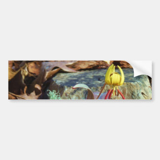 Yellow and Plum Trout Lily and Snail Shell Bumper Stickers