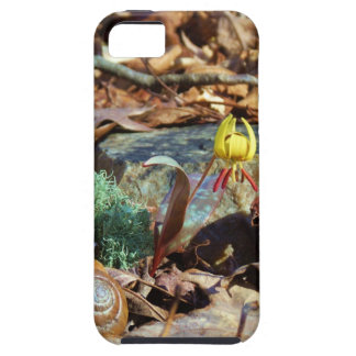 Yellow and Plum Trout Lily and Snail Shell iPhone 5 Covers