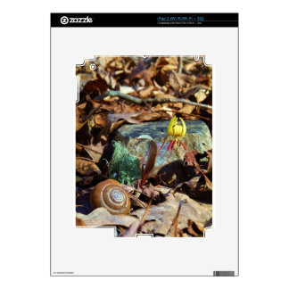 Yellow and Plum Trout Lily and Snail Shell iPad 2 Decal