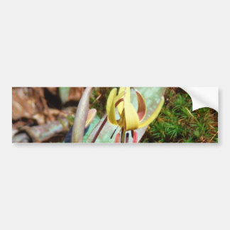 Yellow and Plum Trout Lily Bumper Sticker