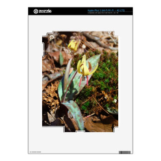 Yellow and Plum Trout Lily iPad 3 Decals