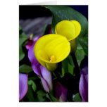 Yellow and purple calla lilies greeting card