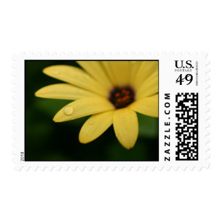 Yellow and purple daisy flower postage stamps