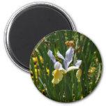 yellow and purple iris 12x10 2 inch round magnet