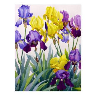 Yellow and Purple Irises Postcard