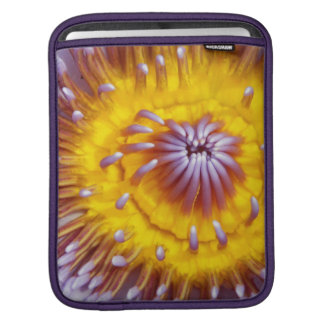 Yellow and Purple Lily Flower Closeup iPad Sleeve