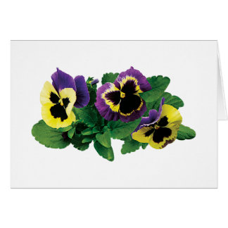 Yellow and Purple Pansy Trio Cards
