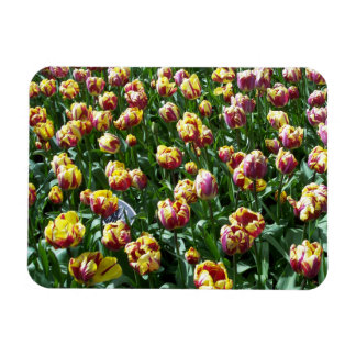 Yellow and Purple Tulips Magnet
