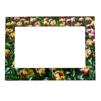Yellow and Purple Tulips Magnetic Frame