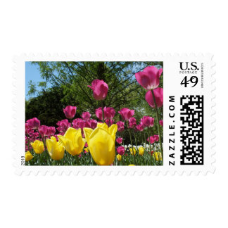 Yellow and Purple Tulips Postage
