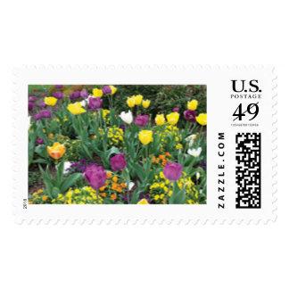 Yellow and Purple Tulips Stamp