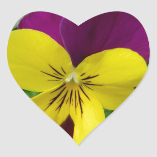 Yellow and Purple Viola (pansy) Flower Heart Sticker