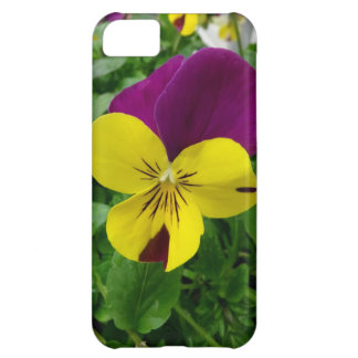 Yellow and Purple Viola (pansy) Flower iPhone 5C Case