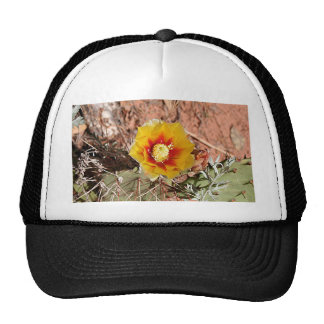Yellow and red cactus flower in bloom trucker hat