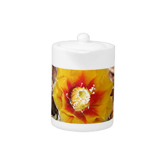 Yellow and red cactus flower in bloom teapot