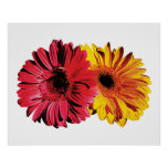 Yellow And Red Gerbera Daisies Poster