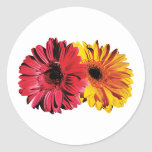 Yellow And Red Gerbera Daisies Round Stickers