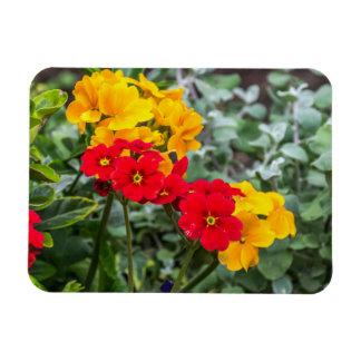 Yellow and red primroses fridge magnet