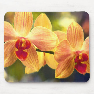 Yellow and Red Striped Phalaenopsis Mouse Pad