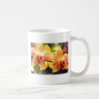 Yellow and Red Striped Phalaenopsis Orchids Classic White Coffee Mug