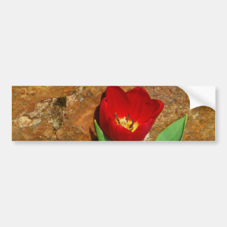 Yellow and Red Tulip Bumper Sticker