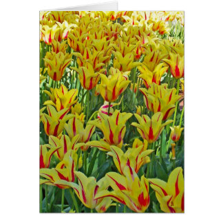Yellow And Red Tulips... Card