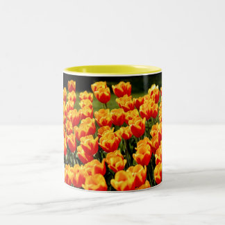 Yellow and red tulips in springtime mug