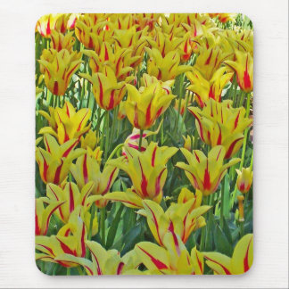 Yellow And Red Tulips... Mouse Pad