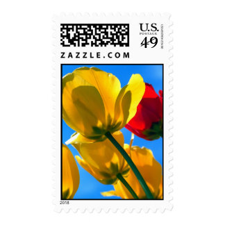Yellow and Red Tulips Postage Stamps
