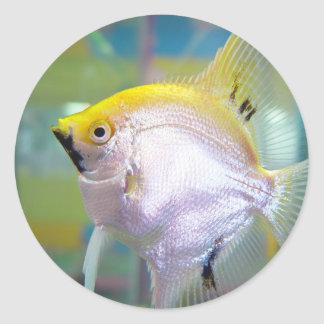 Yellow And Silver Fish In The Tank Classic Round Sticker