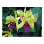 Yellow and Violet Orchids Postcard