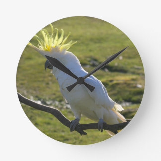 Yellow and White Cockatoo Parrot Round Clock