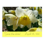 "Yellow and White Daffodil ""Save the Date"" Postcard"