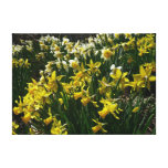 Yellow and White Daffodils Spring Flowers Canvas Print