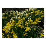 Yellow and White Daffodils Spring Flowers Card