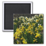 Yellow and White Daffodils Spring Flowers Magnet