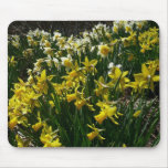 Yellow and White Daffodils Spring Flowers Mouse Pad