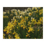Yellow and White Daffodils Spring Flowers Wood Print