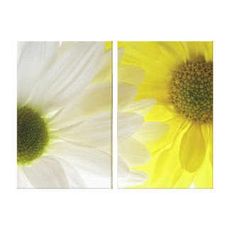 Yellow and White Daisies Canvas Print