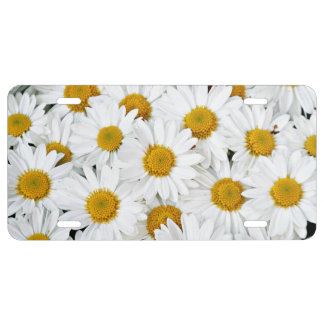 Yellow and white daisies license plate