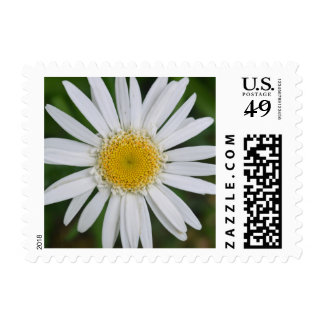 Yellow And White Daisy Flower Customizable Postage
