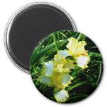 Yellow and White Iris Flower Fridge Magnet