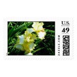 Yellow and White Iris Flower Stamps