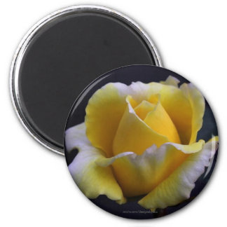 Yellow and White Rose Bud Refrigerator Magnet
